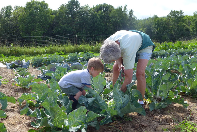 Tying Up Cabbage Leaves with Grandma.