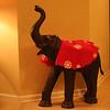 Elephant trumpteting Merry Christmas