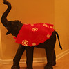Condo Elephant with Christmas duds.
