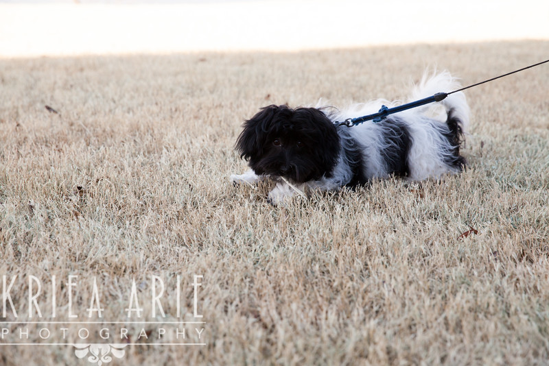 10 02 10 Spencer Pup