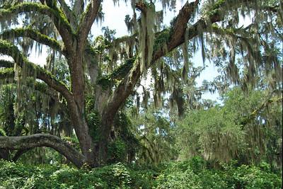 086 Deleon Springs State Park Florida