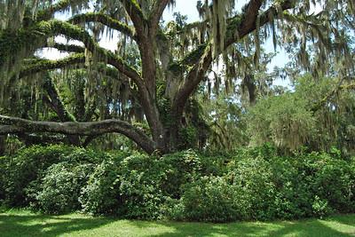 085 Deleon Springs State Park Florida
