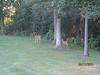 11 September 2011 Golf at Geneva National 001