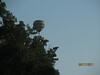 11 September 2011 Golf at Geneva National 003
