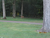 11 September 2011 Golf at Geneva National 006