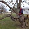 Fun tree in Bit's backyard.