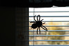 403 Ethan's spider