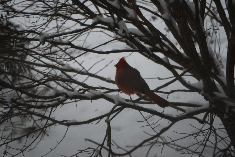 17 December 2011 Cardinals at Home!! 001