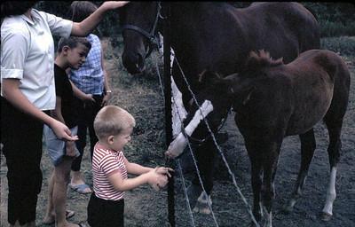 John feeding the horses...