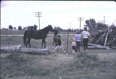 19640601_kansas_horses