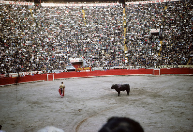 A bullfight at the corrida in Mexico City