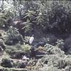Busch Gardens, summer 1969