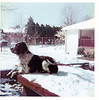 Snow in Dallas, January 1975.  Robby on the roof of his abode.