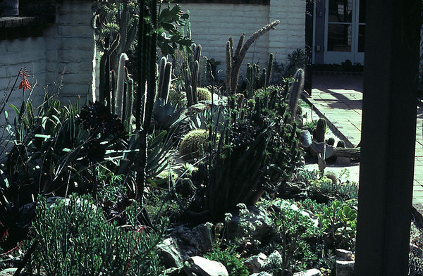 cosentines garden --needs editing--