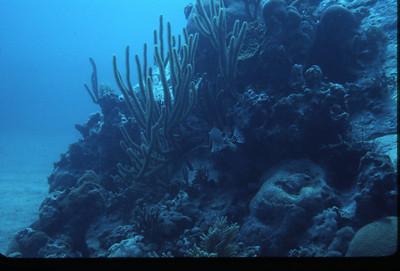 1983 Underwater