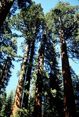 1990-06 Yosemite NP