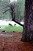 19921228_02_Yosemite