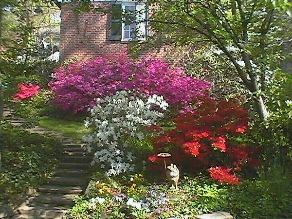 Tunbridge Spring 2000