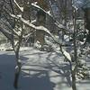Winter Blizzard 2000 Next Day Back Yard