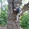 David climbs the tree. Anyone remember this tree from the past?