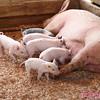 Wilbur and his siblings