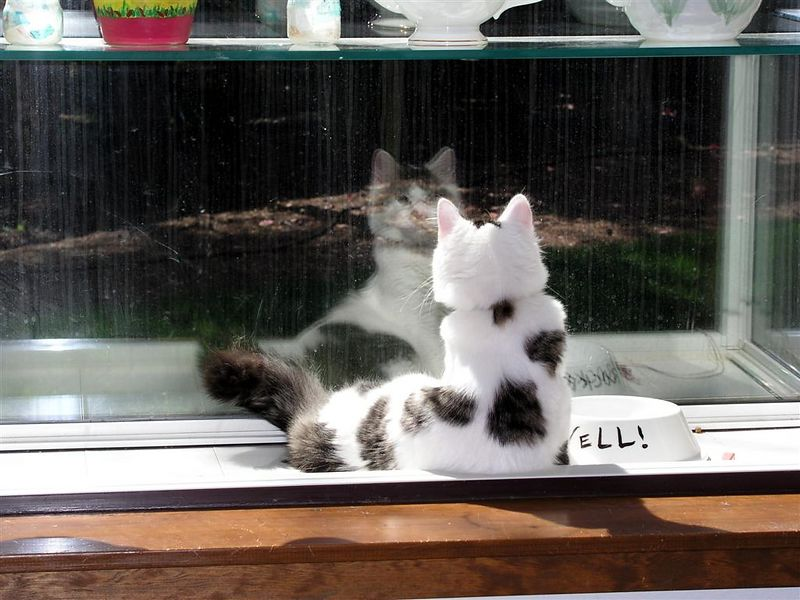 Who's that gorgeous cat in the window?