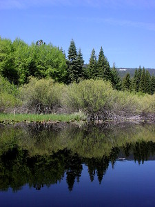 reflections on Recreation Creek