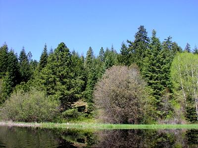 reflections on Recreation Creek