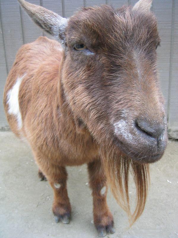 Documented animal rehab - Wow I think he likes it
