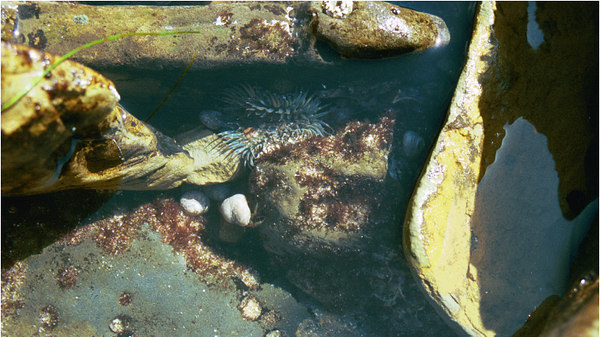 030300point_loma_tide_pool