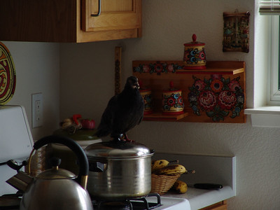 On top of kitchenware