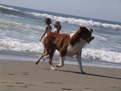 Dog on beach2