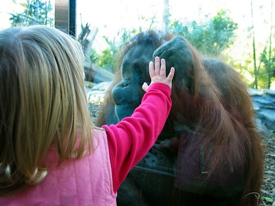 11/28 - Lili is not afraid of a huge gorilla! She even gave him a kiss through the glass...