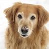 Bailey, Feb 12, 2006
