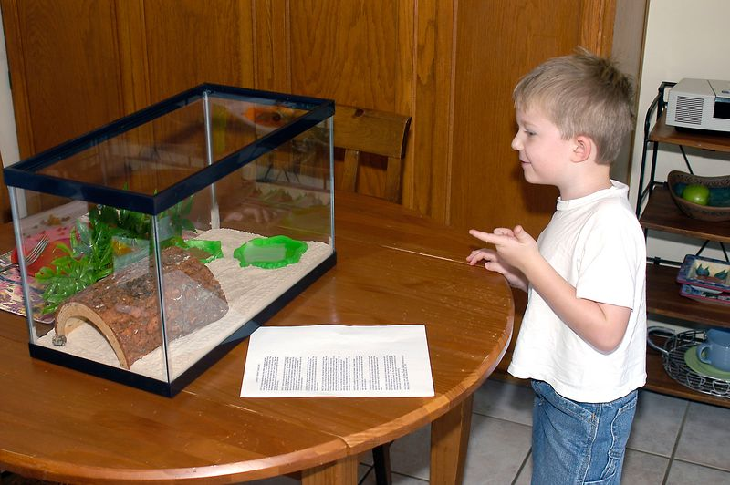 (8-11-2005) Connor meeting his Hermit Crabs for the first time.