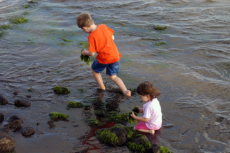 (11-06-2006)  Connor and Claire harvesting seaweed on Molokai.
