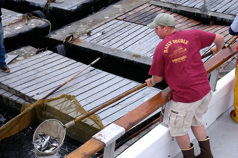 May 28, 2005 -- Loading up at the bait barge.