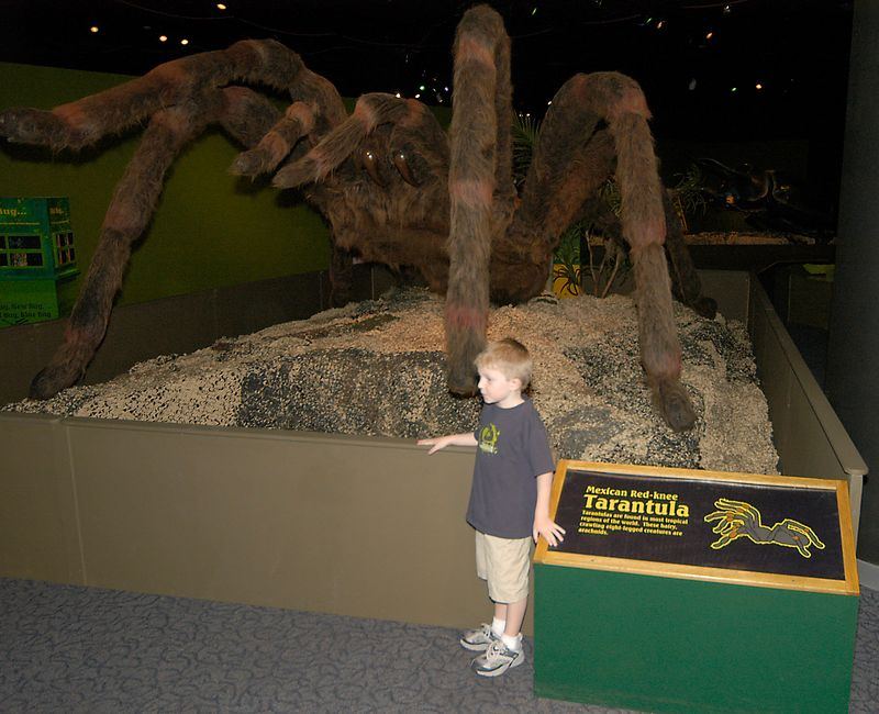 May 29, 2005 -- Connor and another friend at the San Diego Natural History museum.