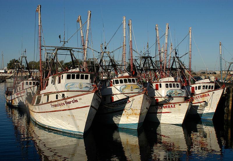 (12.28.2005)  The shrimp fleet in Puerto Peñasco.