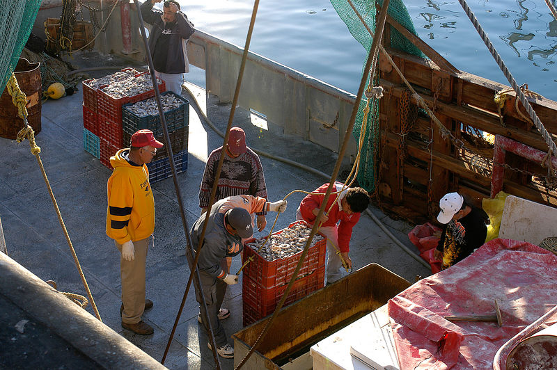 (12.28.2005)  Unloading the shrimp in Puerto Peñasco.