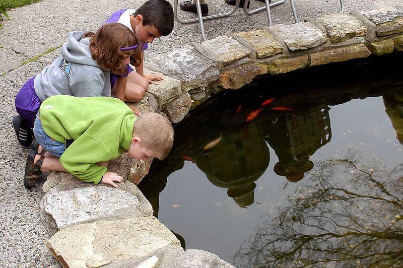 7-1-2005 -- Connor and associates inspecting the gold fish pond at the Carmel City park.