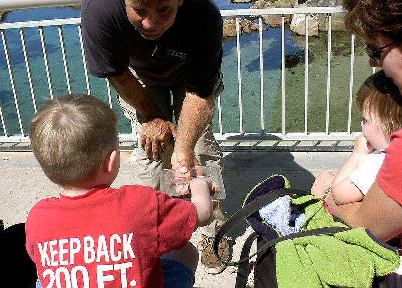 6-27-2005 -- Connor touching a Star fish at the Monterey Bay Aquarium.