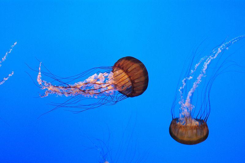 6-27-2005 -- Some of the wildlife at Monterey Bay Aquarium.