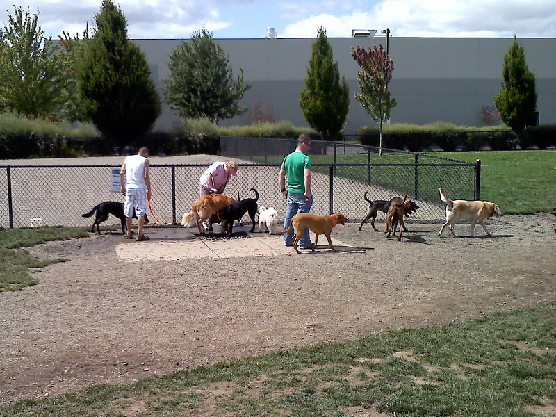 Visting the neighborhood dog park