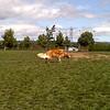 Visting the neighborhood dog park
