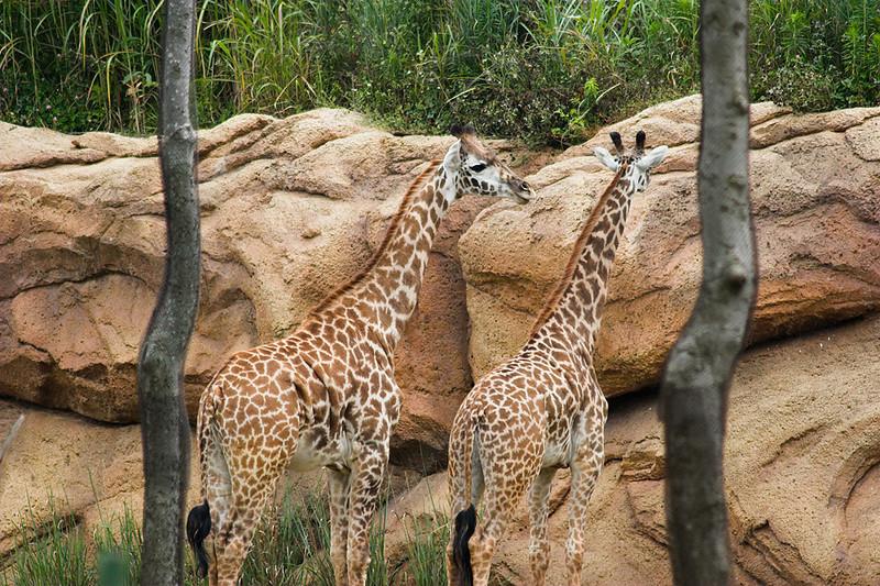 060624_9962w_Zoo