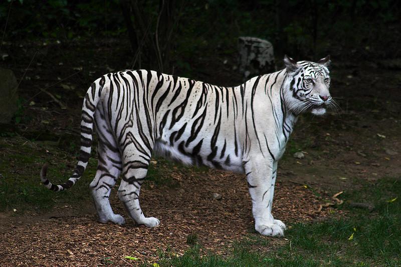 060624_0029w_Zoo