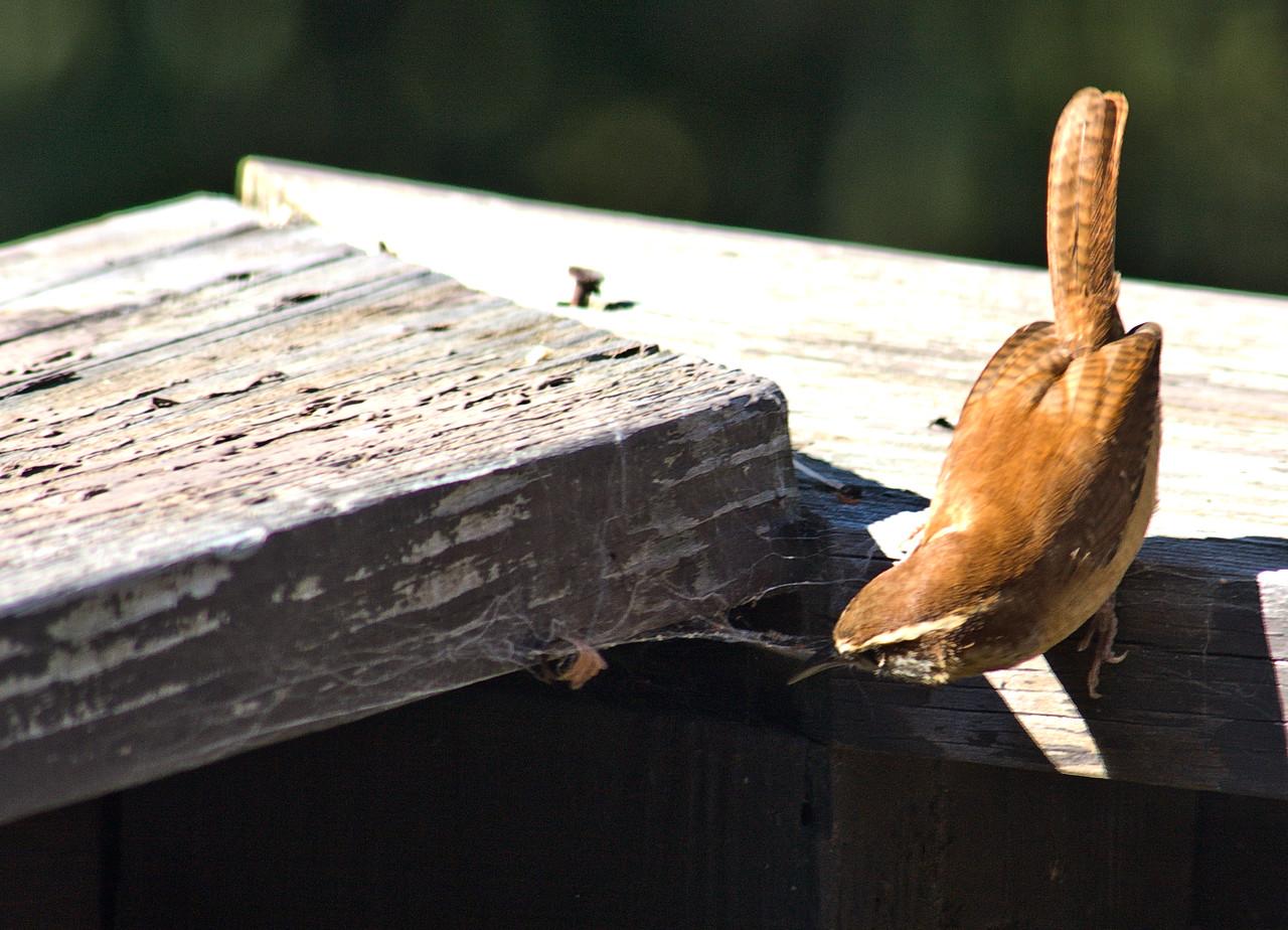Bird on our deck, October 2008 - Photo taken by Jenn
