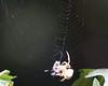 Spider at Sanborn Park Sept 3, 2006 5