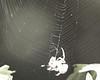 Spider at Sanborn Park Sept 3, 2006 3